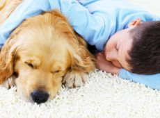 Pet-odor-&-stain-removal